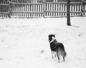 Duchess in Snow