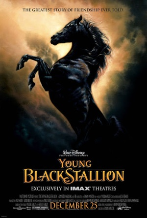 Young Black Stallion - Poster